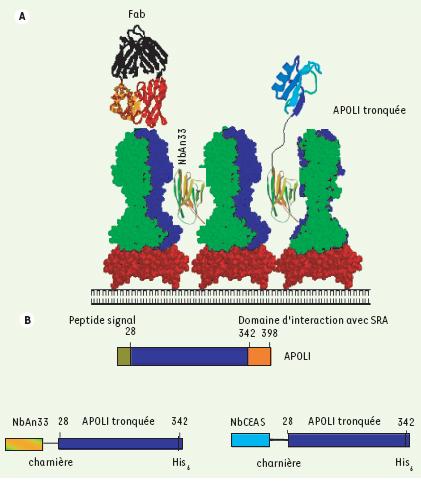 Traitement expérimental de la trypanosomiase africaine par le ...